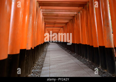 Senbon torii, endless passage of vermillion Torii gates leading to the outer shrine of Fushimi Inari Taisha, head Shinto shrine to god Inari in Kyoto, - Stock Photo