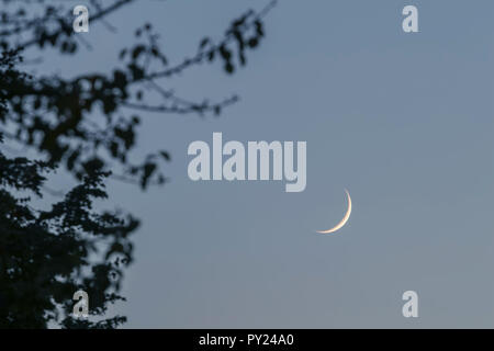 Crescent moon on the night sky. Crescent moon tree leaves - Stock Photo