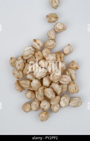 Chickpea or Chick pea (Cicer arietinum) - Stock Photo