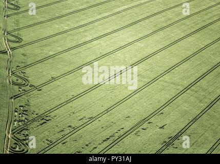 Getreidefeld im Fruehjahr, Luftaufnahme - Stock Photo