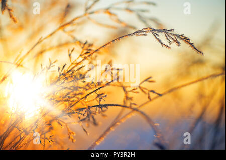 Frost and ice crystals on grass. Selective focus and shallow depth of field. - Stock Photo