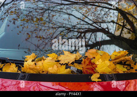 Fallen leaves of a maple on a car cowl in autumn season - Stock Photo