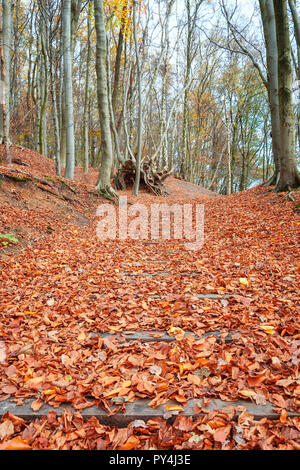 Stairs covered under beautiful and colorful autumn leaves in a Dutch forest in the province of Gelderland - Stock Photo