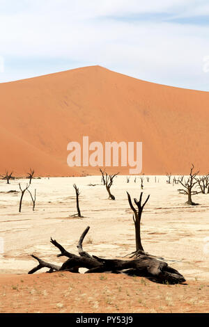 Deadvlei Namibia - trees dead for 8000 years in the dunes of the Namib Desert, Namib Naukluft National Park, Namibia