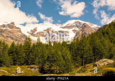 Panoramic view of a forest in the valley of Gressoney near Monte Rosa - Stock Photo