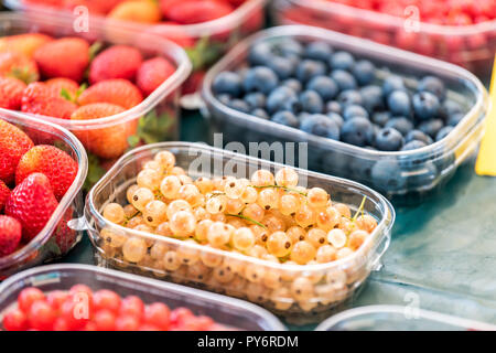 Many plastic containers boxes of berries, white and red currants, blackberries, and strawberries on display in farmers market - Stock Photo