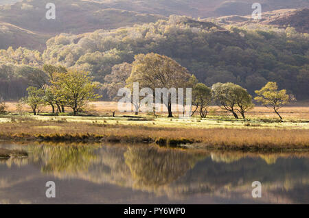 Autumn reflections on Llyn Dinas in the Nant Gwynant Valley, Snowdonia National Park, North Wales, UK