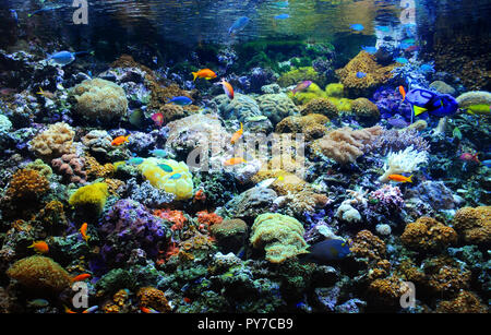 Many small fish in the colorful coral reef - Stock Photo
