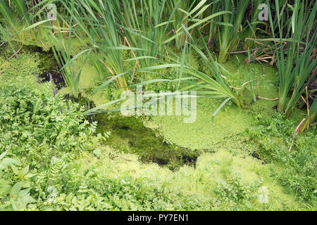 Creek Stagnant water. Water pollution concept - Stock Photo
