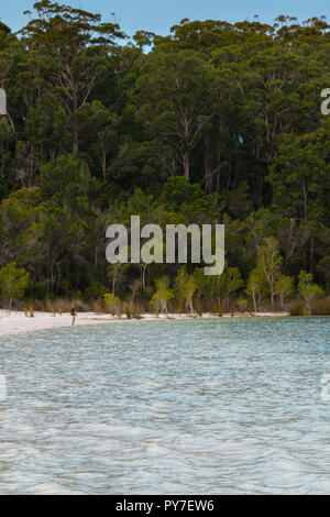 Fraser Island, Australia - October 22, 2018: Prince Harry stands alone at the edge of Lake Mackenzie - Stock Photo