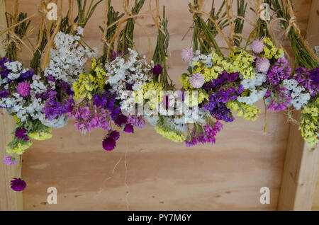 picked Flowers drying in shed, Maine, USA - Stock Photo