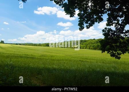 Verdant summer landscape, Croydon, England, United Kingdom, Europe - Stock Photo