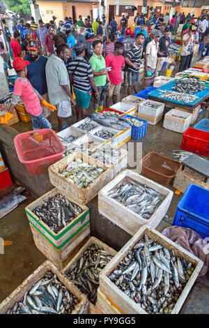 Fish market in Negombo, Sri Lanka. - Stock Photo