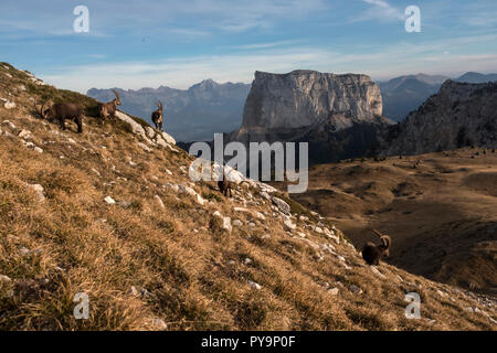 Chichiliane (south-eastern France): the 'Mont Aiguille' mountain in the Vercors Massif, considered as the cradle of mountaineering. In the foreground, - Stock Photo