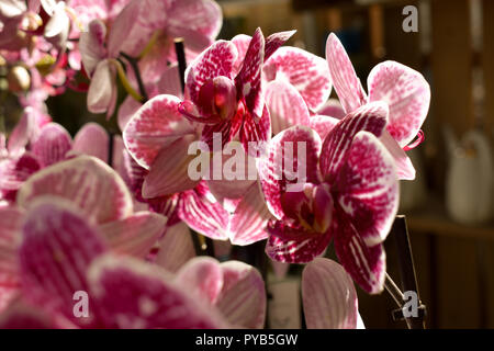 Light through the pink flowers - Stock Photo