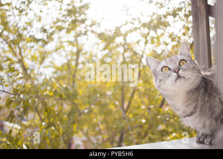 Gray british cat portrait on a background of blurred autumn garden leaves - Stock Photo