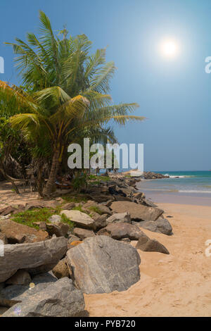 Stones and palm trees on a sandy beach. Stock Photo