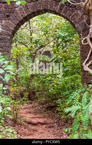 Here you can see the ancient overgrown stone arc in the middle of jungles as a part of a huge ruined Portugal fort complex. - Stock Photo