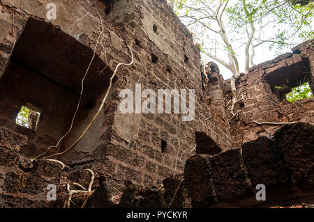 Here you can see the ancient overgrown fortress wall with arcs, stairs and other architectural details in the middle of jungles as a part of a huge ru - Stock Photo