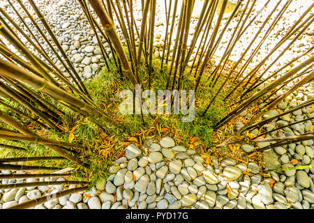 Bamboo growing in the Monte Palace Tropical Garden on Maderia - Portugal