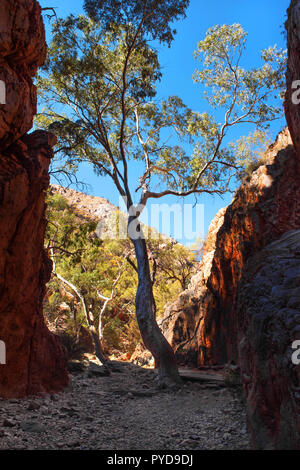 Standley Chasm, West MacDonnell Ranges National Park, Northern Territory, Australia - Stock Photo