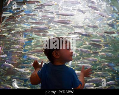 baby boy visiting aquarium - Stock Photo