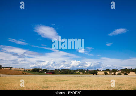 Norwegian rural landscape with traditional red wooden barn and wheat field on a bright summer day - Stock Photo