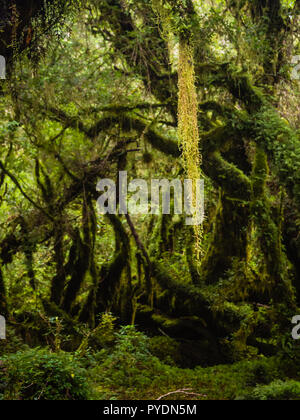 Detail of the enchanted forest in carretera austral, Bosque encantado Chile patagonia - Stock Photo