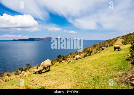 View of the Sun island from the moon island in lake Titicaca, Bolivia. Sheeps eating grass - Stock Photo
