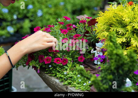 A young woman`s hand cleaning out weeds and other debris from a flower garden with a cute waving sailor figure. - Stock Photo