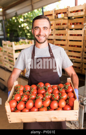Happy young man farmer carrying tomatoes in wooden boxes in a greenhouse - Stock Photo