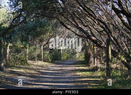 Walking path in forrest during daytime on sunny day - Stock Photo