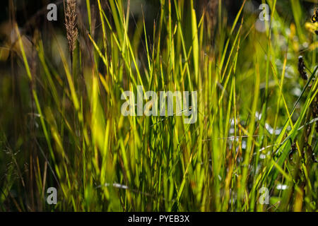 green foliage in early autumn with blur background and some colored autumn leaves - Stock Photo