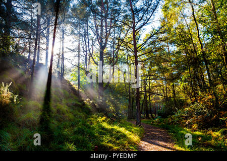 Sunbeams shining though trees in a forest around the Blue Pool, Dorset, UK - Stock Photo