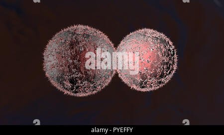 3D rendered Illustration of the Mitosis and division of a Cancer Cell. - Stock Photo