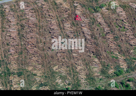 Aerial view, forestry work, woodfalls, trees fell Forestry on the way in front of the Holzborn, Meschede, Sauerland, North Rhine-Westphalia, Germany,  - Stock Photo