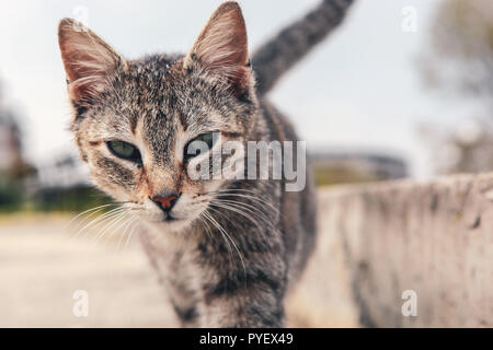 A beautiful cat on the street - Stock Photo