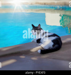 Black and White cat sitting by the pool relaxing. Stock Image. - Stock Photo