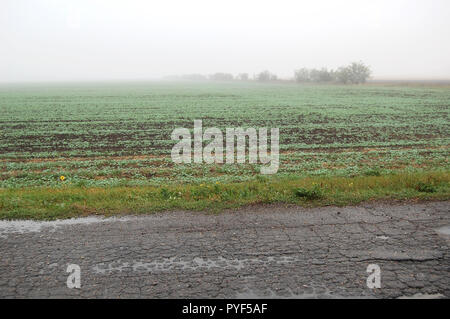A foggy weat field near an old rural road on a rainy autumn day. - Stock Photo