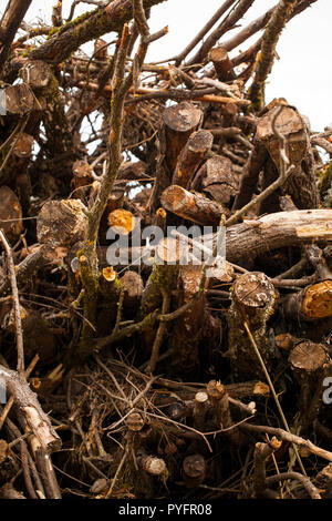 A large stack of timber in a forest waiting to be turned into biofuel - Stock Photo