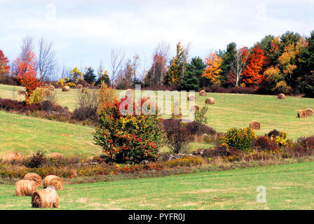 Beautifully colored Fall foliage lines the hay fields of a farm in up state New York, USA. - Stock Photo