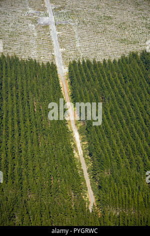 Pine forests below Mount Tarawera, near Rotorua, North Island, New Zealand - aerial - Stock Photo