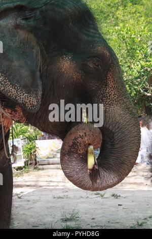 Elefant portrait - Stock Photo
