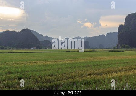 rice fields with the karst mountains in ninh binh, vietnam - Stock Photo