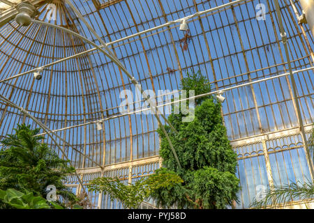 The domed roof of the Victorian Palmhouse in the Botanic Gardens Belfast. - Stock Photo