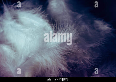 Pile of white feathers against a dramatic dark background - Stock Photo
