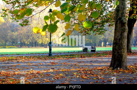 A lonely bench standing a huge park. Colorful leaves on the branches and on the ground. - Stock Photo