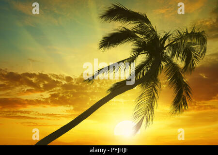 Silhouette coconut palm on background bright sunset. Toned photo. Copy space - Stock Photo