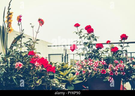 Autumn balcony garden. Various flowers in pots on terrace. Floral urban gardening - Stock Photo