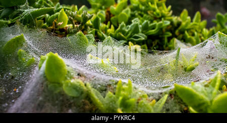 Spiderwebs with dew drops early in the morning - Stock Photo